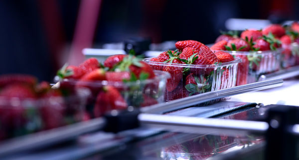 Common Questions to Consider When Purchasing a Nitrogen Generator for Your Food Packaging Operation