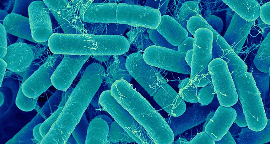 Bacteria Elimination
