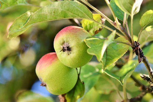 Fruit Orchards / Storage