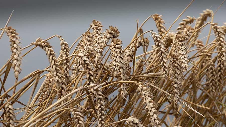 Kiln / Grain Drying